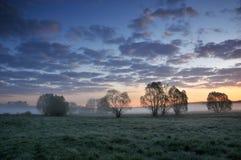 在一个有薄雾的草甸的黎明 免版税库存照片
