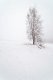 在一个有雾的冬天领域的一棵树。 库存图片