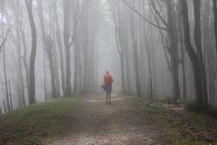 在一个有雾的森林里向阿西西 免版税库存照片
