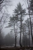 在一个有雾的领域的两棵树 免版税库存图片