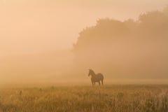 在一个有雾的领域的马 库存照片
