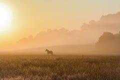 在一个有雾的领域的马 库存图片