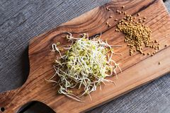 在一个木切板的干燥和发芽的胡芦巴籽 库存图片