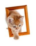 在一个木制框架外面的红色小猫 免版税库存照片