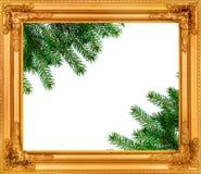 在一个木制框架的云杉分支 免版税库存照片