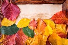 在一个木制框架的秋叶 库存照片
