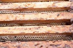 在一个木制框架的空的蜂窝 图库摄影