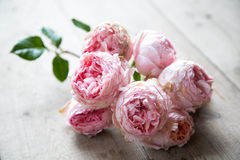 在一个木地板上的桃红色英国玫瑰 库存图片