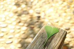 在一个木块的一片绿色银杏树叶子 库存图片