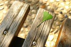 在一个木块的一片绿色银杏树叶子 免版税库存图片