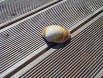 在一个木大阳台的海壳在阳光下 库存图片