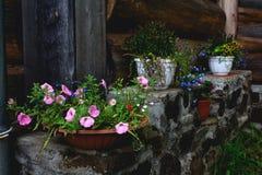 在一个木房子附近的花 免版税库存图片