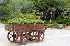在一个木推车种植的植物,多孔黏土rgb 库存图片