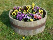 在一个木木盆的蝴蝶花 库存图片