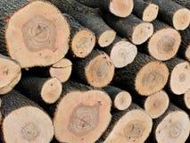 在一个木材围场堆积的日志的被锯的末端 免版税库存照片