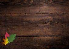 在一个木板的五颜六色的叶子 库存图片