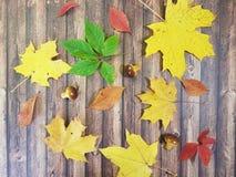 在一个木板的槭树叶子 免版税库存图片