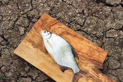 在一个木板的鲜鱼 库存图片