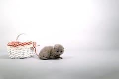 在一个木板箱外面的小猫 免版税库存照片