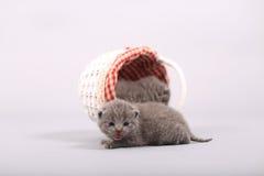 在一个木板箱的小猫 库存照片