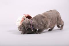 在一个木板箱的小猫 免版税库存图片