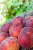 在一个木树桩的桃子谎言 免版税库存照片