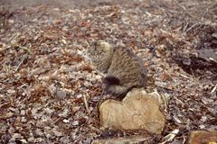 在一个木树桩的猫 库存照片