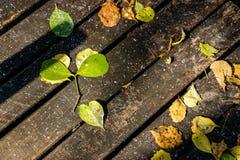 在一个木桥的秋天叶子 免版税库存图片