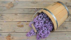在一个木桶的淡紫色花在木背景 库存图片