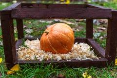 在一个木正方形的秋天南瓜在锯木屑 库存照片