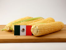 在一个木盘区的墨西哥国旗用在白色bac隔绝的玉米 图库摄影