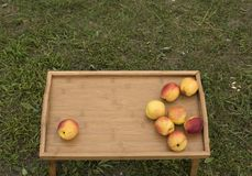 在一个木盘子的明亮的油桃在绿草背景  图库摄影