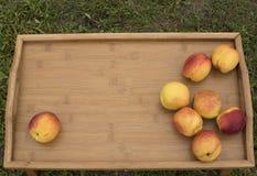 在一个木盘子的明亮的油桃在绿草背景  库存照片