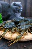 在一个木盘子的活小龙虾在前景 一只灰色猫看新鲜的抓住 库存照片