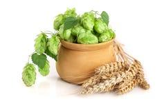 在一个木碗的啤酒花球果树有在白色背景特写镜头隔绝的麦子的耳朵的 库存图片