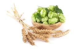 在一个木碗的啤酒花球果树有麦子的耳朵的在白色背景特写镜头的 免版税库存照片