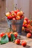 在一个木立场的成熟水多的樱桃 库存照片