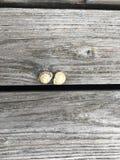 在一个木箱的两只蜗牛 免版税库存照片