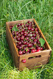 在一个木箱的新鲜的樱桃 库存图片