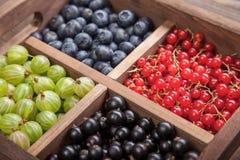 在一个木箱的红色黑醋栗蓝莓鹅莓 免版税库存照片