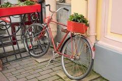 在一个木箱的花在一辆红色洗染的自行车的树干在房子的混凝土墙停放了 免版税库存图片