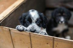 在一个木箱的逗人喜爱的小的小狗要求采取充满希望 无家可归的狗 免版税库存图片
