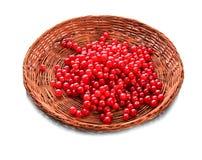 在一个木篮子的明亮的红浆果,隔绝在白色背景 充分条板箱莓果 酸和水多的红色一张顶视图  图库摄影