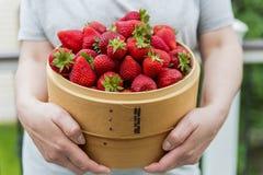 在一个木篮子的草莓 免版税库存照片