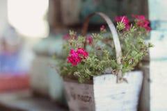在一个木罐的桃红色花 库存图片