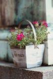 在一个木罐的桃红色花 图库摄影