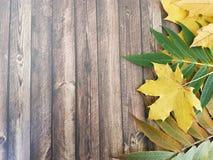 在一个木背景框架的秋叶 库存照片