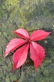在一个木背景的秋天叶子 免版税库存图片