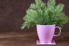 在一个杯子的冷杉木枝杈在木桌上 免版税库存图片