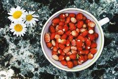 在一个杯子的草莓在一棵木背景和春黄菊 免版税库存图片